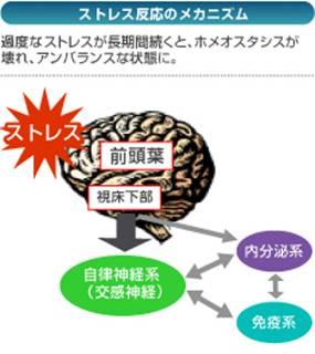 ストレス反応のメカニズム